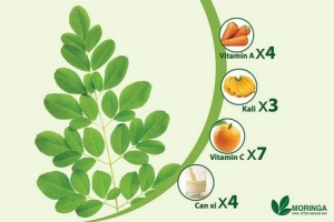 Cách phá thai đơn giản bằng cây ba đậu dại